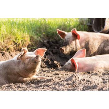 Colis de viande de porc, viandes sélectionnées et préparées par la maison Lamorlette, boucher charcutier des Hautes-Alpes