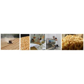 Du blé, un champs de blé.